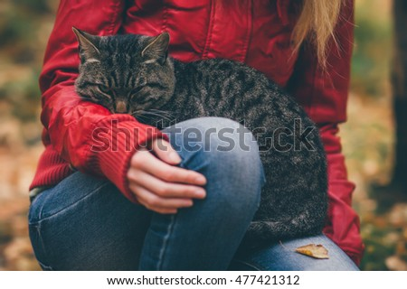 Gray Cat homeless and Woman hugging hands Lifestyle and Friendship help concept