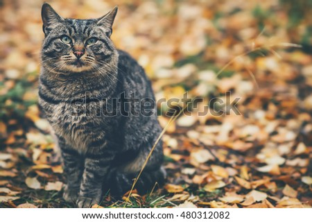Gray Cat homeless sitting outdoor autumn leaves nature on background