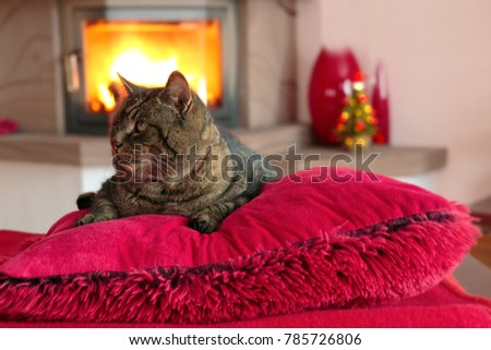 Gray cat is sitting in front of the fireplace. Cat lies on red pillows near fireplace with flame.