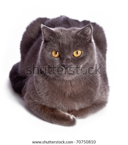 Gray cat isolated on white - stock photo