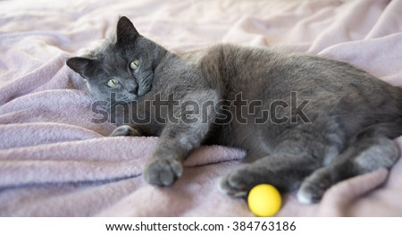 Gray Cat Laying on Bed Next to Window - stock photo