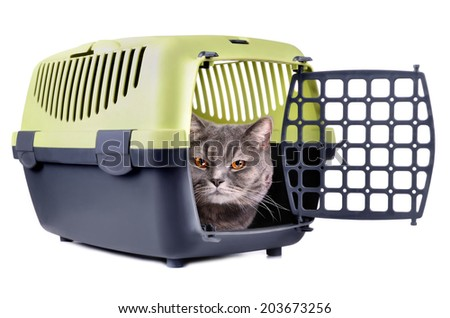 Gray cat looking from carrier box on a white background - stock photo