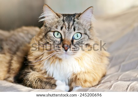 Gray cat lying on the bed in the sun - stock photo