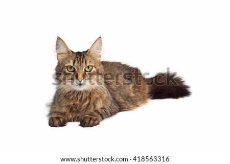 Gray cat on a white background - stock photo