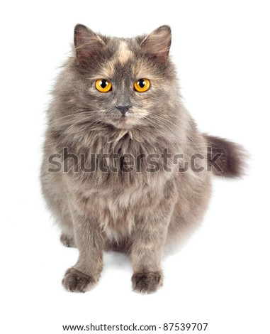 Gray cat on white background - stock photo