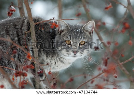 Gray cat perched in a tree trying to catch birds on cold winter day