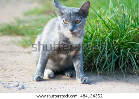 gray cat playing in the garden