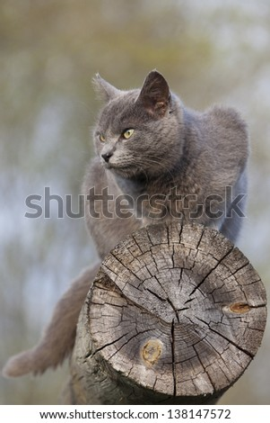 gray cat resting on top of a log against blue sky - stock photo