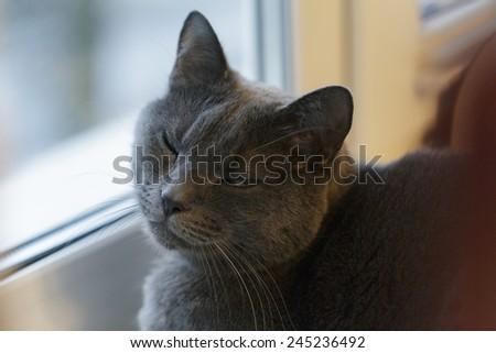 gray cat sits on window, selective focus - stock photo