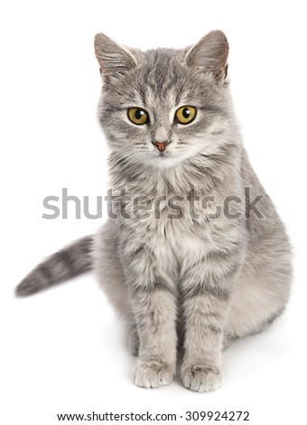 Gray cat sitting isolated on white background - stock photo