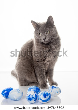 Gray Cat Sitting Next to White Eggs with Blue Marble Color  - stock photo