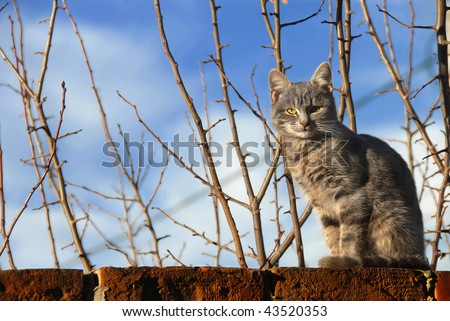 gray cat sitting on brick wall over branches and blue sky - stock photo