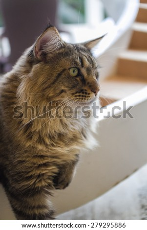 gray cat standing with soft focus - stock photo