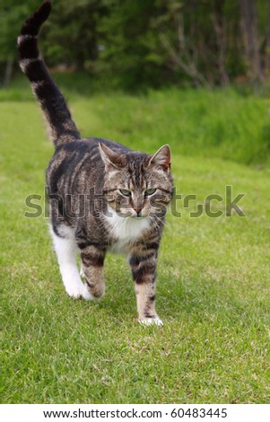 gray cat walking on grass