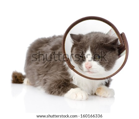 Gray cat wearing a funnel collar. isolated on white background - stock photo