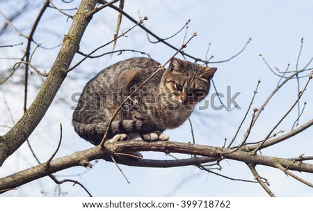 gray cat with black stripes sitting on a branch of a tree which had no leaves