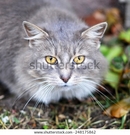 gray cat with clever unhappy eyes - stock photo