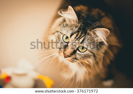 Gray cat with green eyes. Gray cat. Striped not purebred kitten. Small predator. Small cat. - stock photo