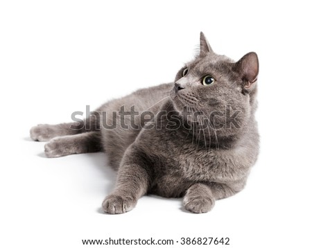 gray cat with green eyes lying on white background