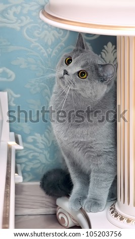 gray cat with red eyes sits on light furniture - stock photo