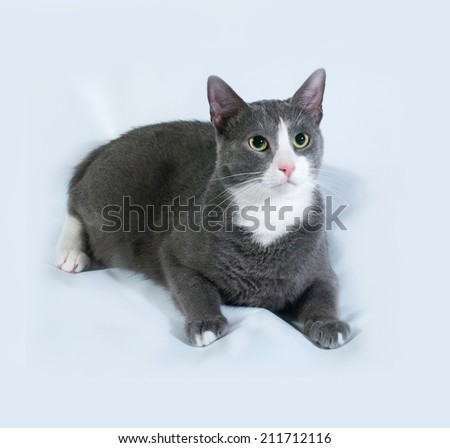 Gray cat with white spots lying on gray background