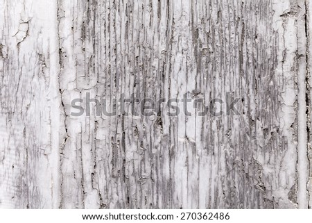 Gray coat of paint on a weathered wooden window shutter panel cracking. Brittle surface texture on decaying plank of wood. Exterior architectural detail. Close up shot outdoors on tripod. Background.