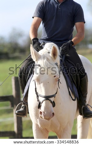 Gray colored stallion galloping with unknown rider - stock photo