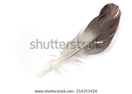 Gray feather isolated on white  - stock photo