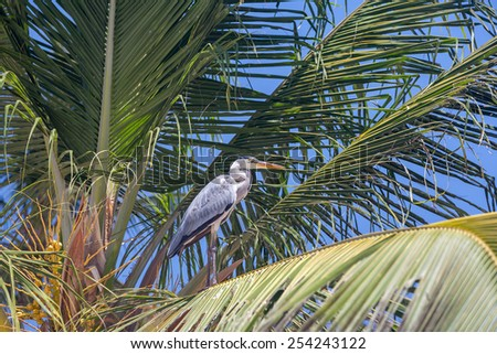 gray heron on the palm against the blue sky - stock photo