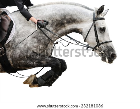 Gray horse in jumping show, isolated on white background