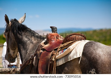 Gray horse with western working saddle tied to fence at roundup, Cibola County, New Mexico, USA. - stock photo