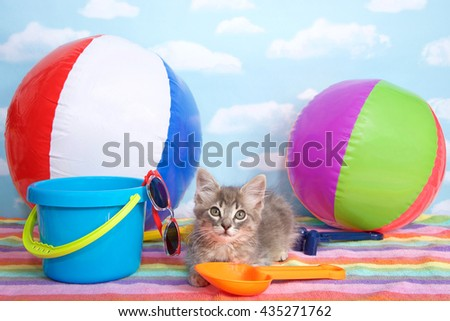 Gray kitten laying on colorful striped beach towel with beach balls, shovel, pale, sun glasses blue sky background white fluffy clouds. Looking forward. Horizontal presentation with copy space above - stock photo