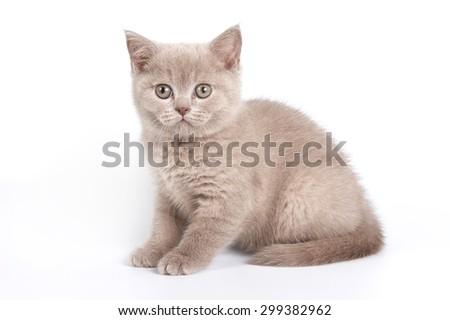 Gray kitten sitting and looking at the camera (isolated on white) - stock photo