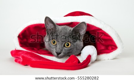 Gray kitten sitting with Christmas hat
