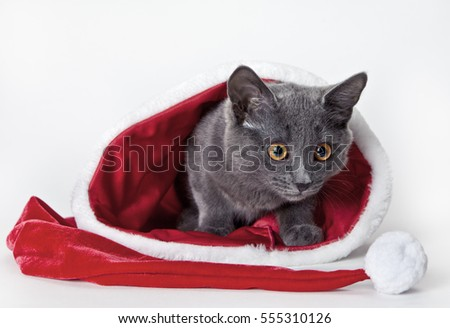 Gray kitten sitting with Christmas hat on white background