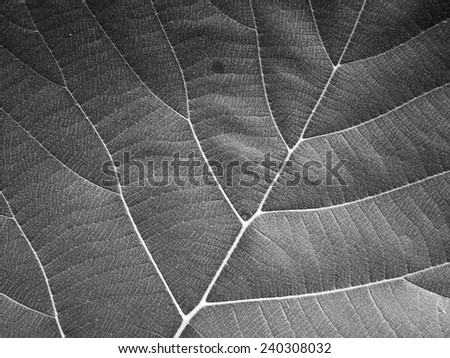 gray leaf texture - stock photo