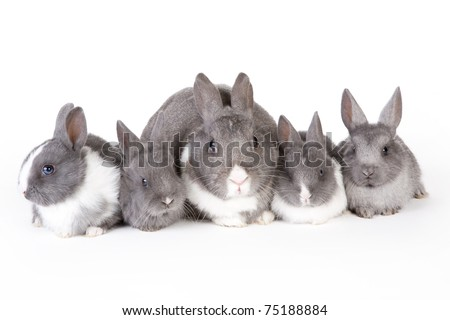 gray mother rabbit with four bunnies, isolated