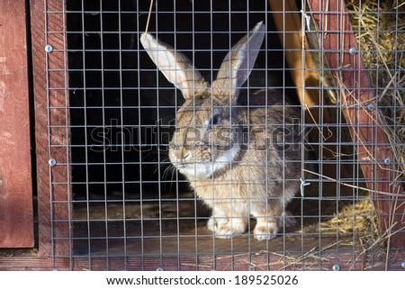 Gray rabbit in cage on a sunny day - stock photo
