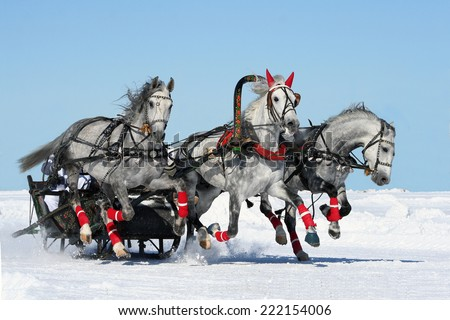 Gray russian troika. white horses. isolated. - stock photo