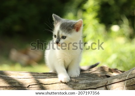 Gray small kitten sitting on the tree branch - stock photo