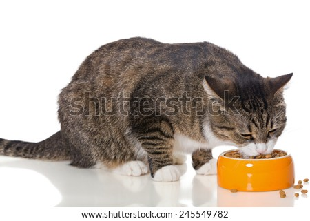 Gray striped cat eats dry food, isolated on white - stock photo