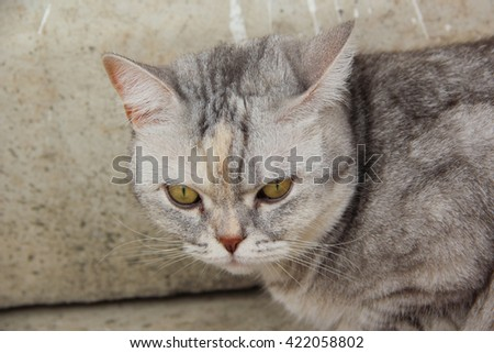 Gray striped dissatisfied cat on a background of concrete - stock photo