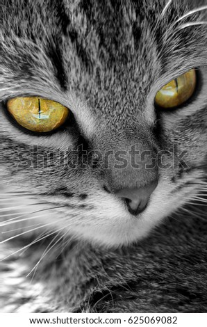 Gray tabby cat on a light background.