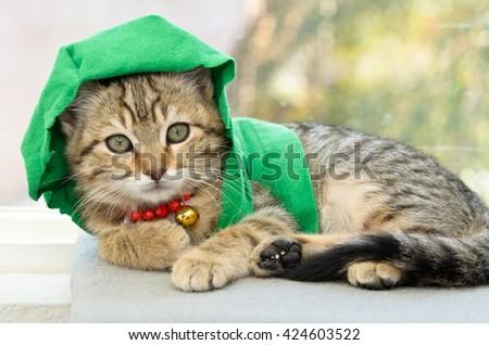Gray Tabby Kitten in Green Hoody - stock photo