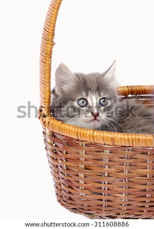 Gray tiny kitten sits in wicker basket, on white isolated  - stock photo