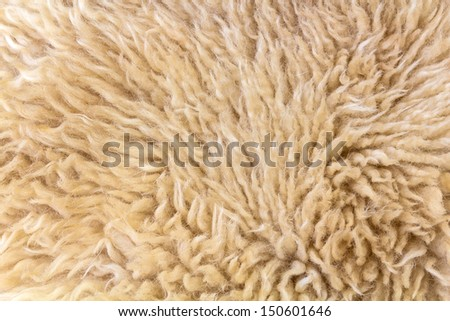gray woolly sheep fleece for background texture  - stock photo