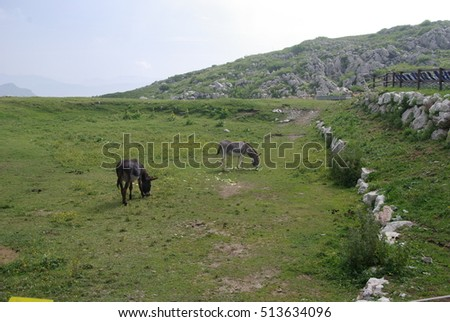 Grazing donkeys, Italian Alps, lake Garda sorroundings, Italy.