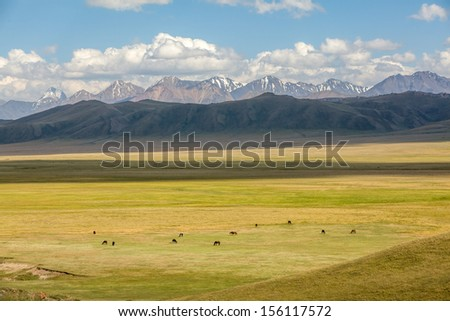 Grazing herd of horses in mountains, top view - stock photo