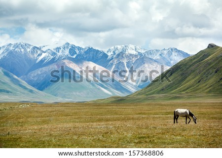 Grazing horse in mountain valley, Tien Shan, Kyrgyzstan - stock photo