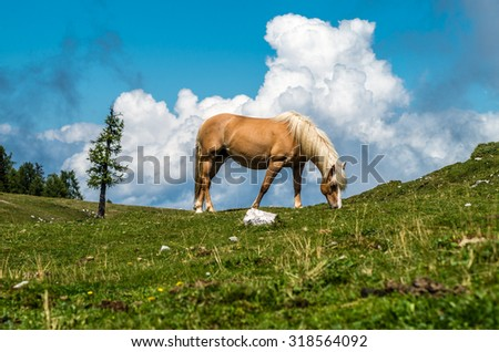 Grazing horse on mountain pasture - stock photo